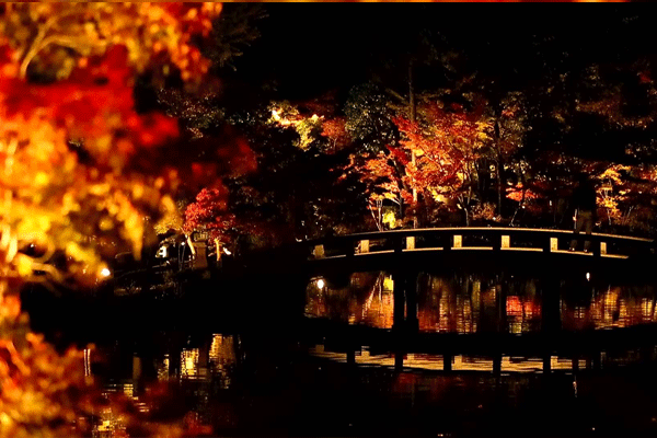 kyoto-autumn-leaves4