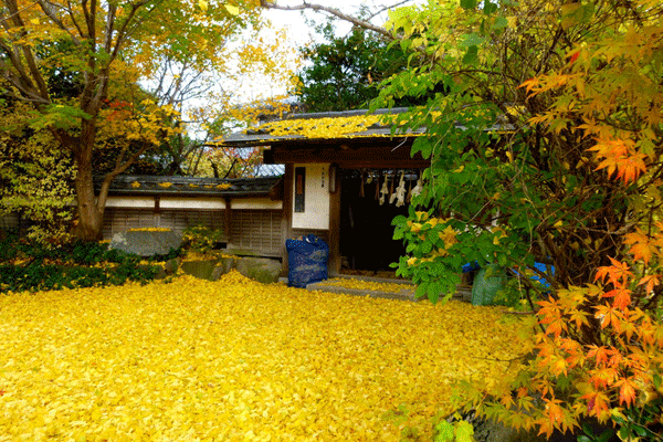 kyoto-autumn-leaves9